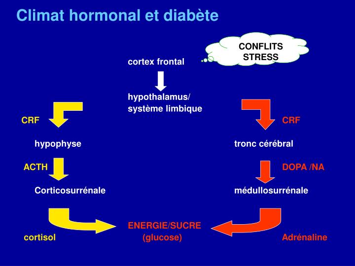 Climat hormonal et diabète