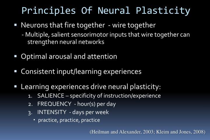 Principles Of Neural Plasticity