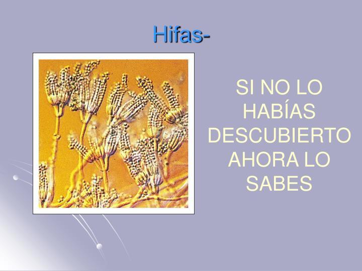 Hifas-