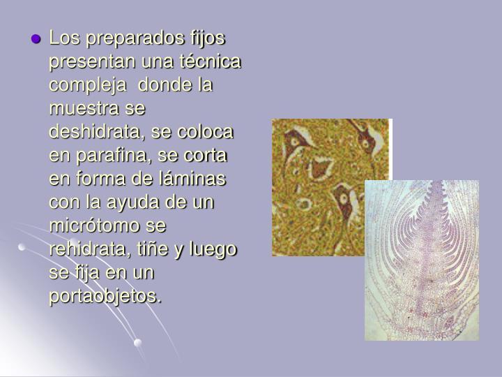Los preparados fijos presentan una técnica compleja  donde la muestra se  deshidrata, se coloca en parafina, se corta en forma de láminas con la ayuda de un micrótomo se rehidrata, tiñe y luego se fija en un portaobjetos.