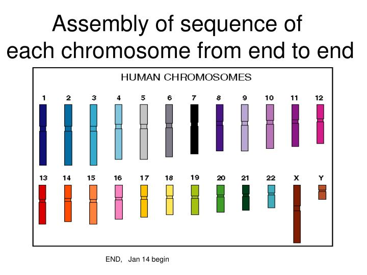 Assembly of sequence of