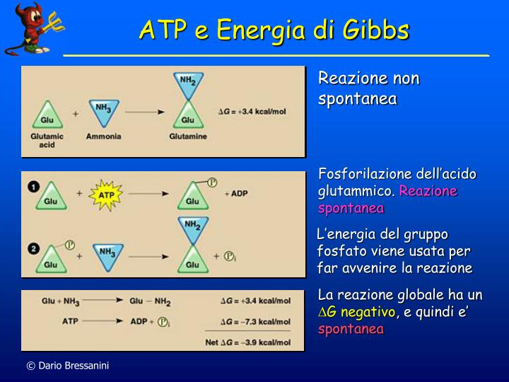 ATP e Energia di Gibbs