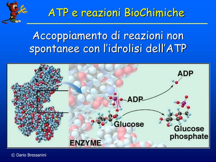 ATP e reazioni BioChimiche