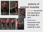 actions of skeletal muscles