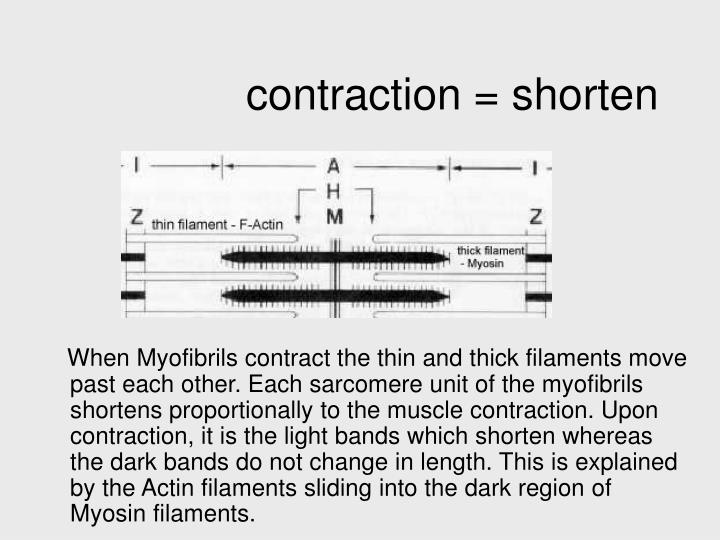 contraction = shorten
