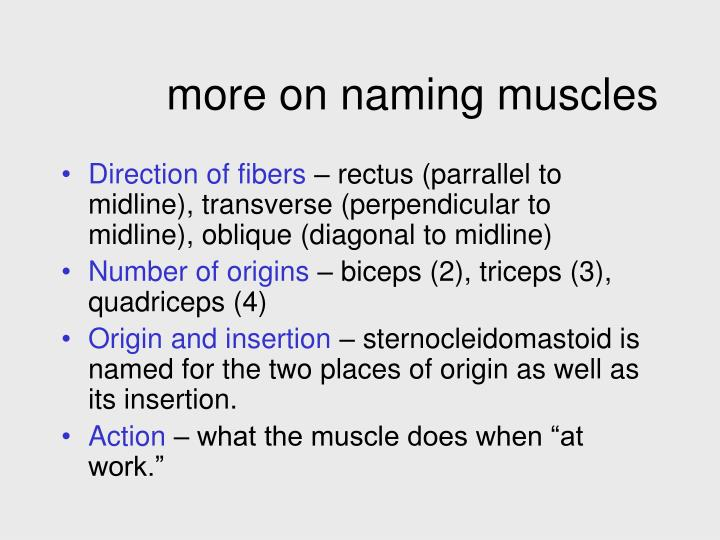 more on naming muscles