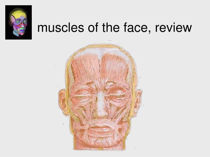 muscles of the face, review