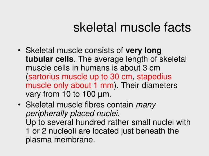 skeletal muscle facts