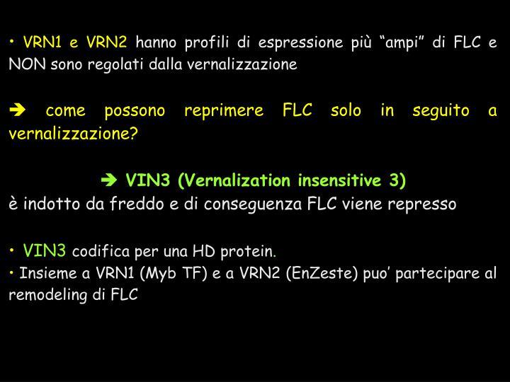 VRN1 e VRN2