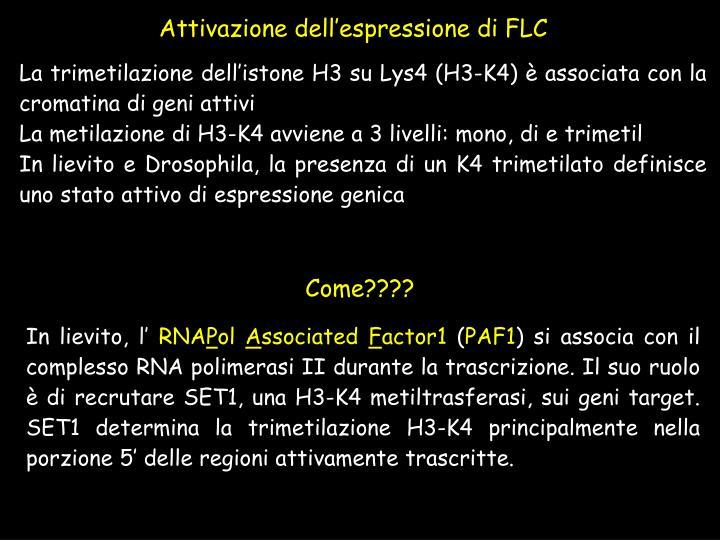 Attivazione dell'espressione di FLC