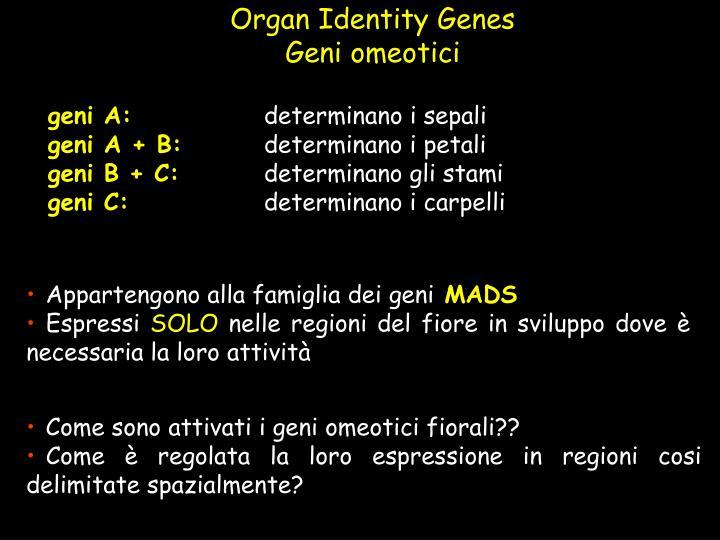 Organ Identity Genes