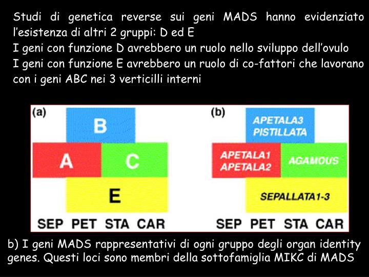 Studi di genetica reverse sui geni MADS hanno evidenziato l'esistenza di altri 2 gruppi: D ed E