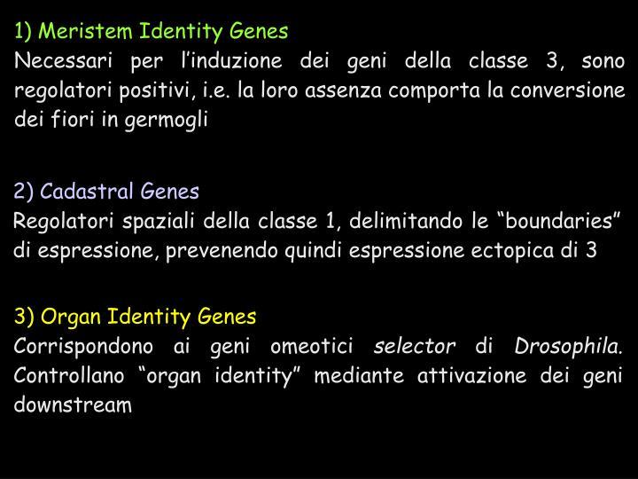 1) Meristem Identity Genes