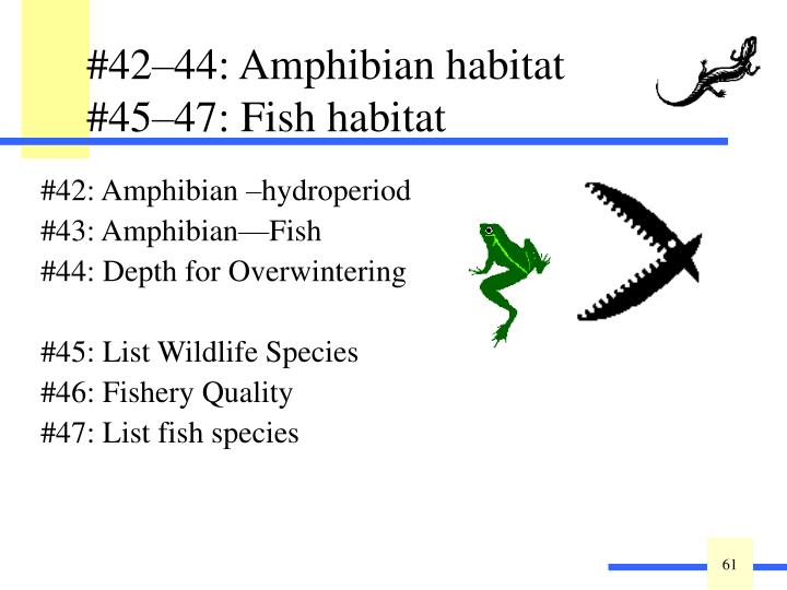 #42–44: Amphibian habitat