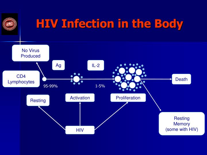 HIV Infection in the Body