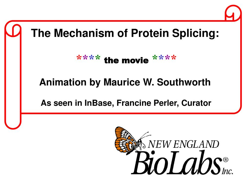 The Mechanism of Protein Splicing: