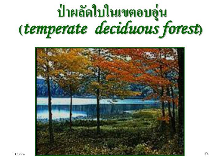 ป่าผลัดใบในเขตอบอุ่น