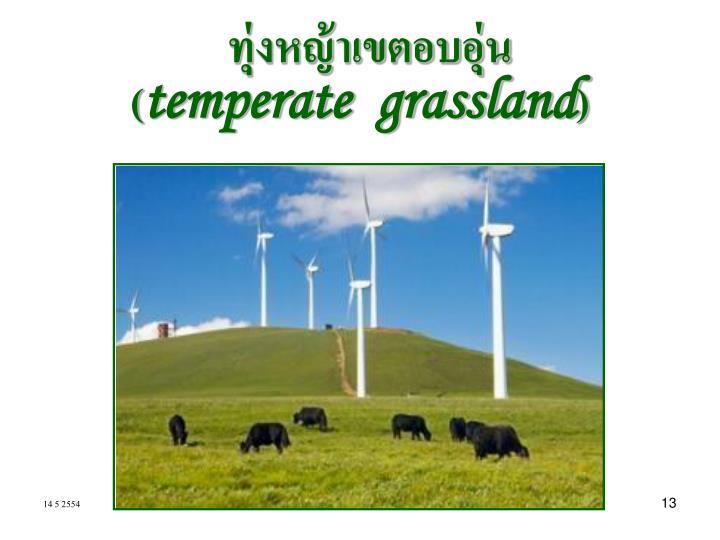 ทุ่งหญ้าเขตอบอุ่น