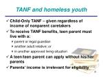 tanf and homeless youth