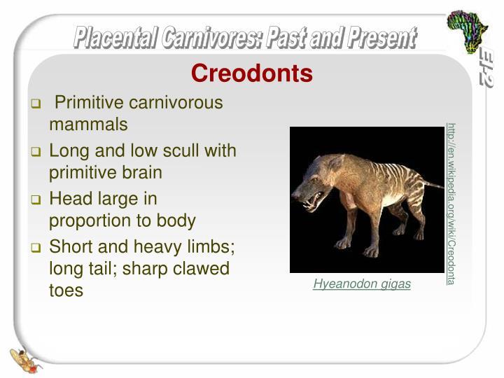 Creodonts