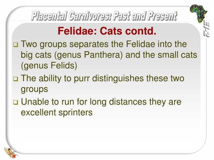 Two groups separates the Felidae into the  big cats (genus Panthera) and the small cats (genus Felids)