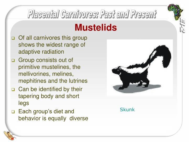 Mustelids