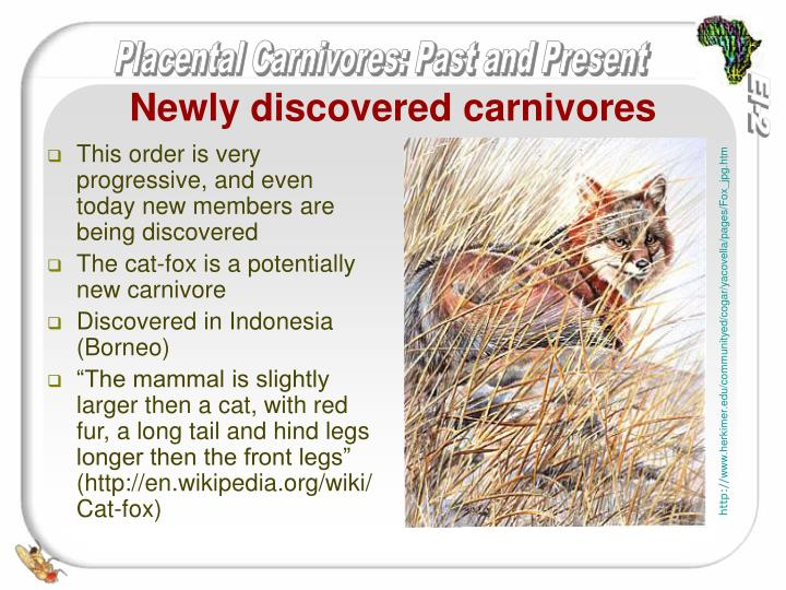 Newly discovered carnivores