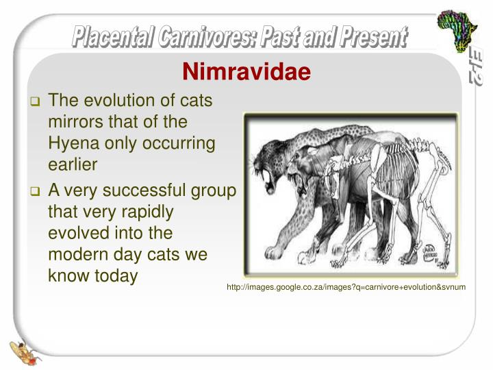 Nimravidae