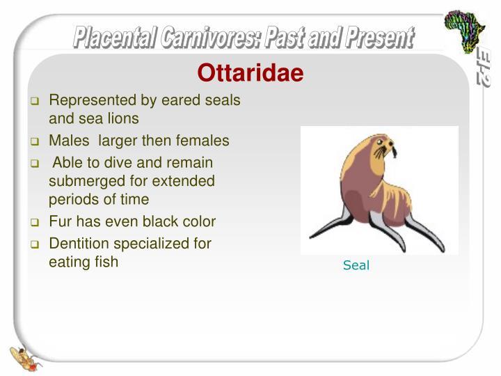 Ottaridae