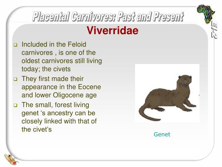 Viverridae