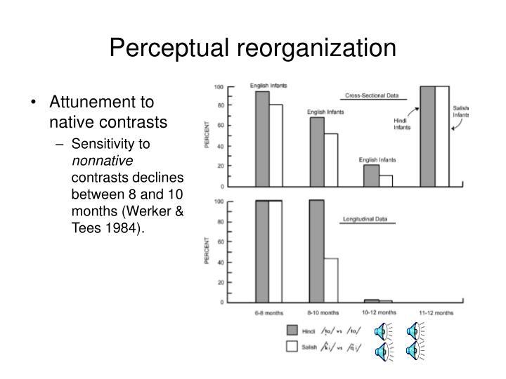 Perceptual reorganization