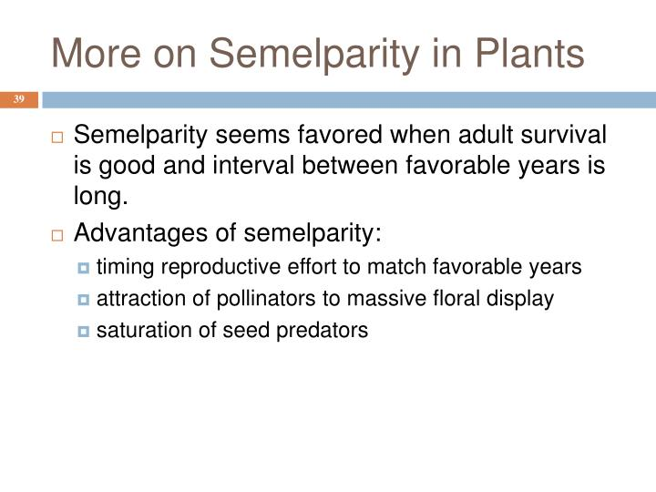 More on Semelparity in Plants