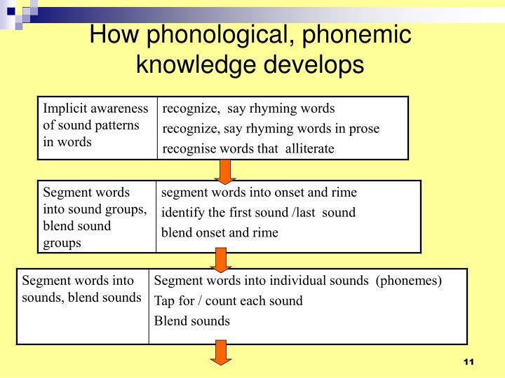 How phonological, phonemic knowledge develops