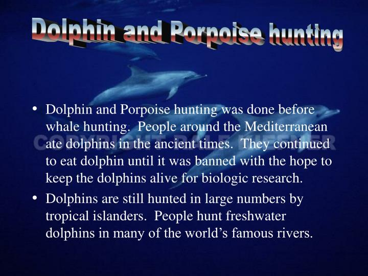 Dolphin and Porpoise hunting