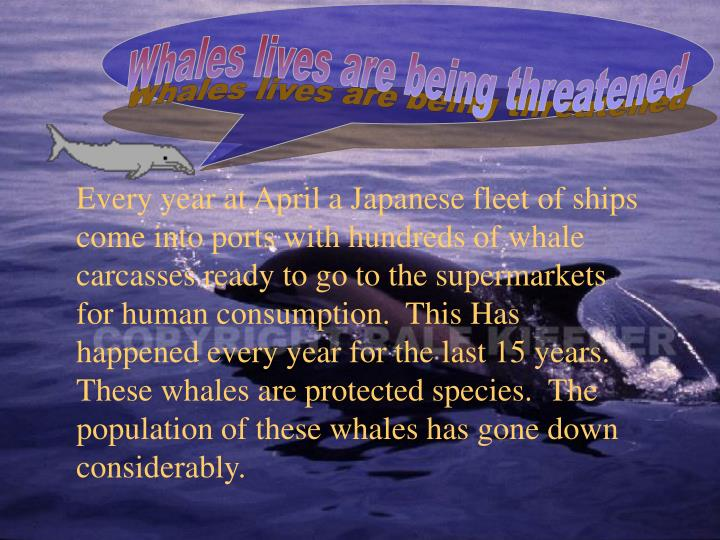 Whales lives are being threatened