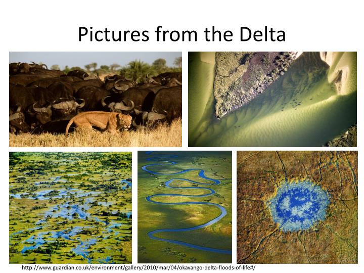 Pictures from the Delta