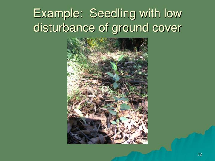 Example:  Seedling with low disturbance of ground cover