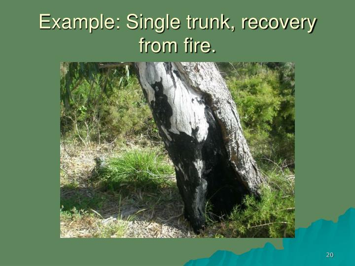 Example: Single trunk, recovery from fire.