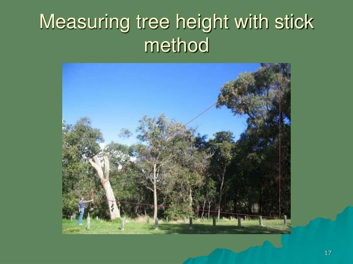 Measuring tree height with stick method