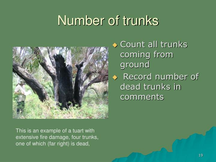 Number of trunks
