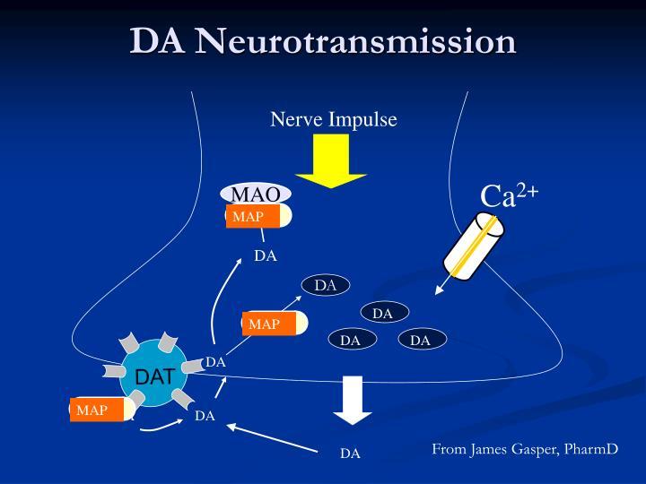 DA Neurotransmission