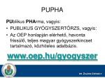 pupha1