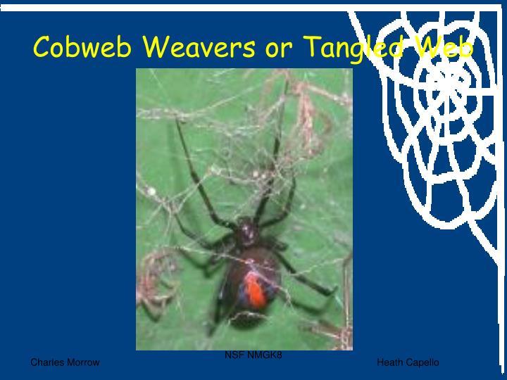 Cobweb Weavers or Tangled Web