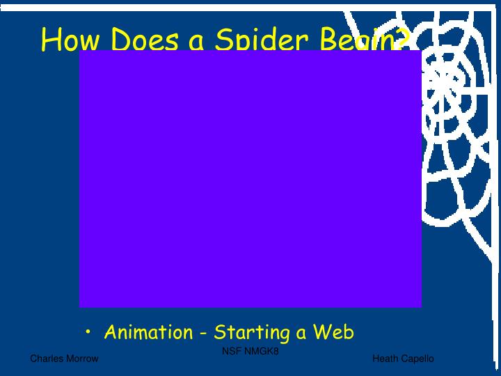 How Does a Spider Begin?