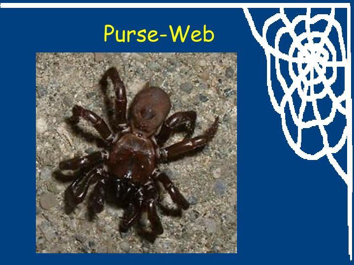 Purse-Web