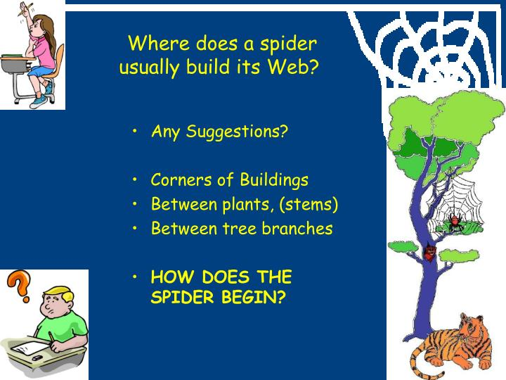 Where does a spider