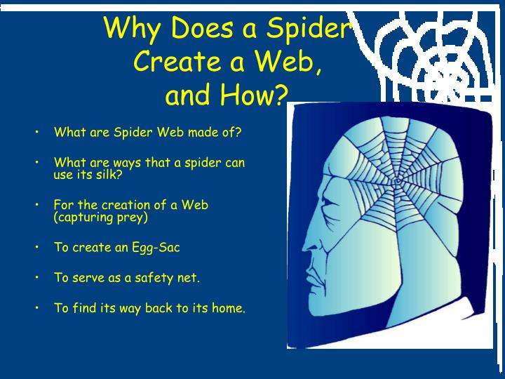 Why Does a Spider