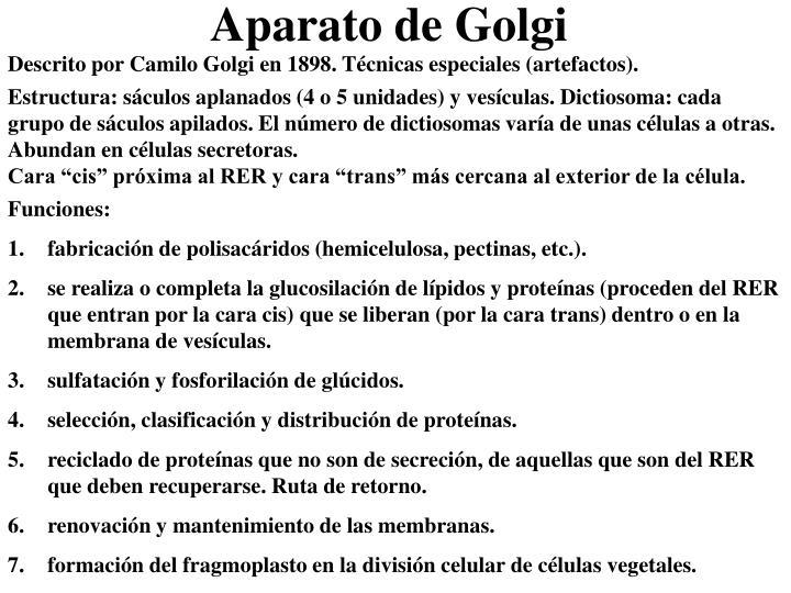 Descrito por Camilo Golgi en 1898. Técnicas especiales (artefactos).
