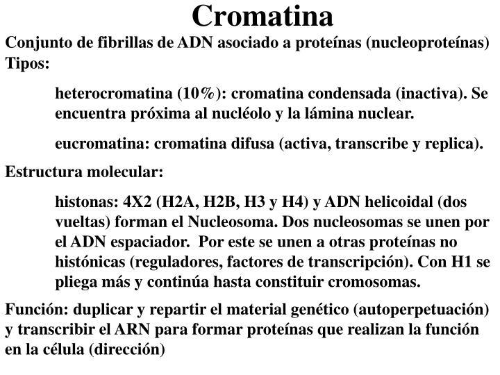 Conjunto de fibrillas de ADN asociado a proteínas (nucleoproteínas)