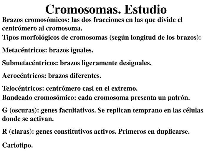 Brazos cromosómicos: las dos fracciones en las que divide el centrómero al cromosoma.